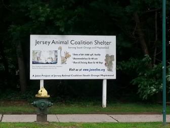 Jersey Animal Coalition