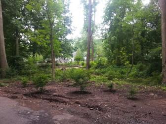 Brook Path 3