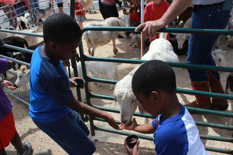 MayFest 2015 Petting Zoo